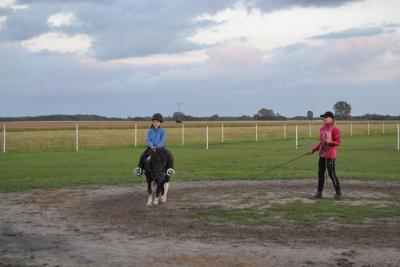 konie uniejów