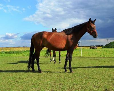 nauka jazdy konnej agroturystyka